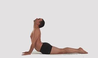 Yoga fiche posturale détaille de bhujangasana le serpend